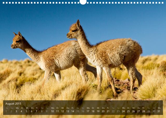 kalender_a3_m_schuepbach_019